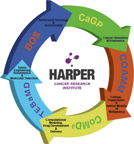 Harper Directors Circle graphic