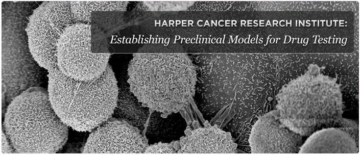 Establishing Preclinical Models for Drug Testing